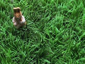 Venta de grass americano y plantas ornamentales lima for Vendo plantas ornamentales